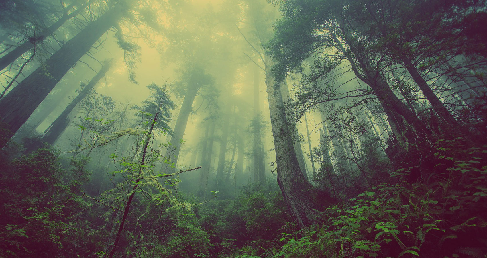 Lifting Fog written by Jacob Damstra at Spillwords.com