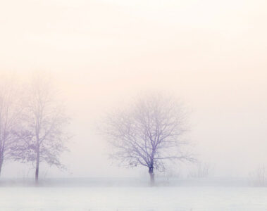 Winter Branches by Margaret Widdemer at Spillwords.com
