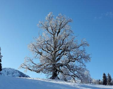 Winter Is Wonderful by Linda Dobinson at Spillwords.com
