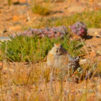 Ladak pika - Glimpse of the Wild Wild East... at Spillwords.com
