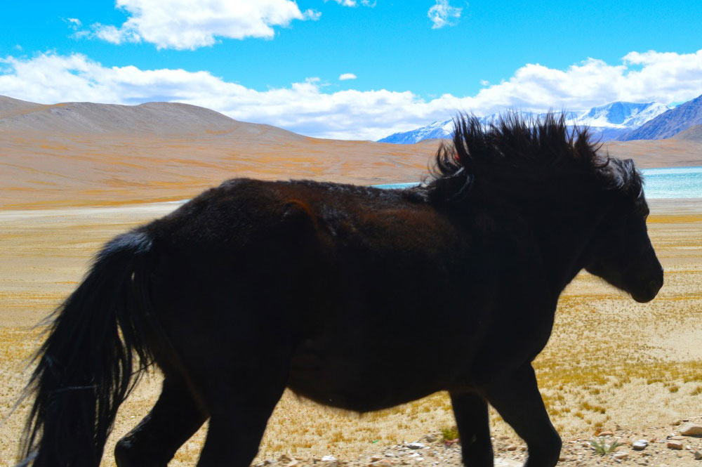 Horse - Glimpse of the Wild Wild East... at Spillwords.com