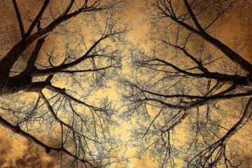 Twelve Steps To Winter by Joan McNerneyat Spillwords.com
