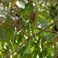 An Accidental Birder... by Nishand Venugopal at Spillwords.com