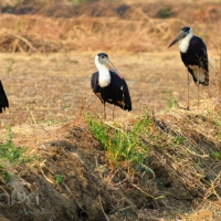 An Accidental Birder... by Nishand Venugopal at Spillwords.com