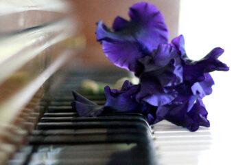 Flower And Prayer, written by Stephanie Lynn Hilpert at Spillwords.com