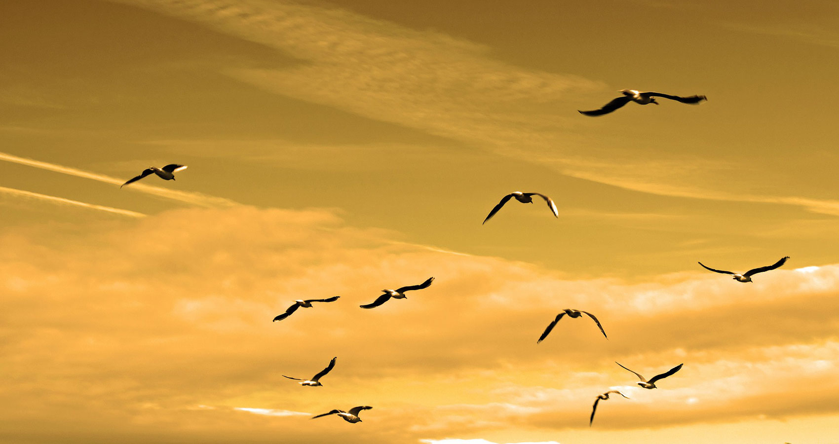 Gulls of Brimstone by Mileva Anastasiadou at Spillwords.com