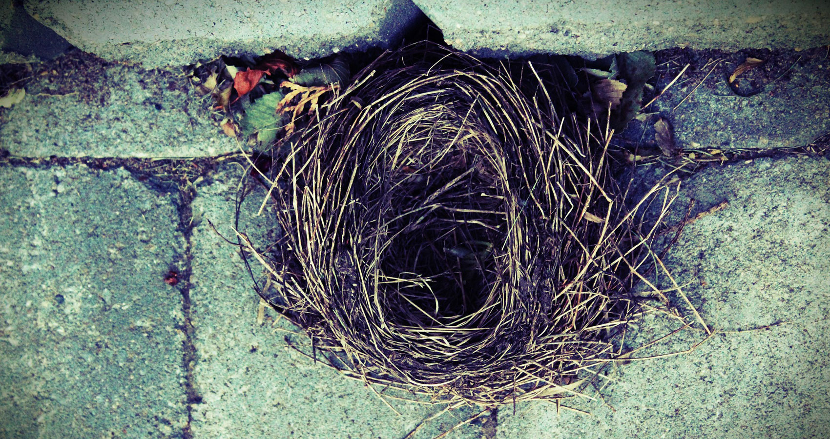 Nest written by RhymeRula at Spillwords.com