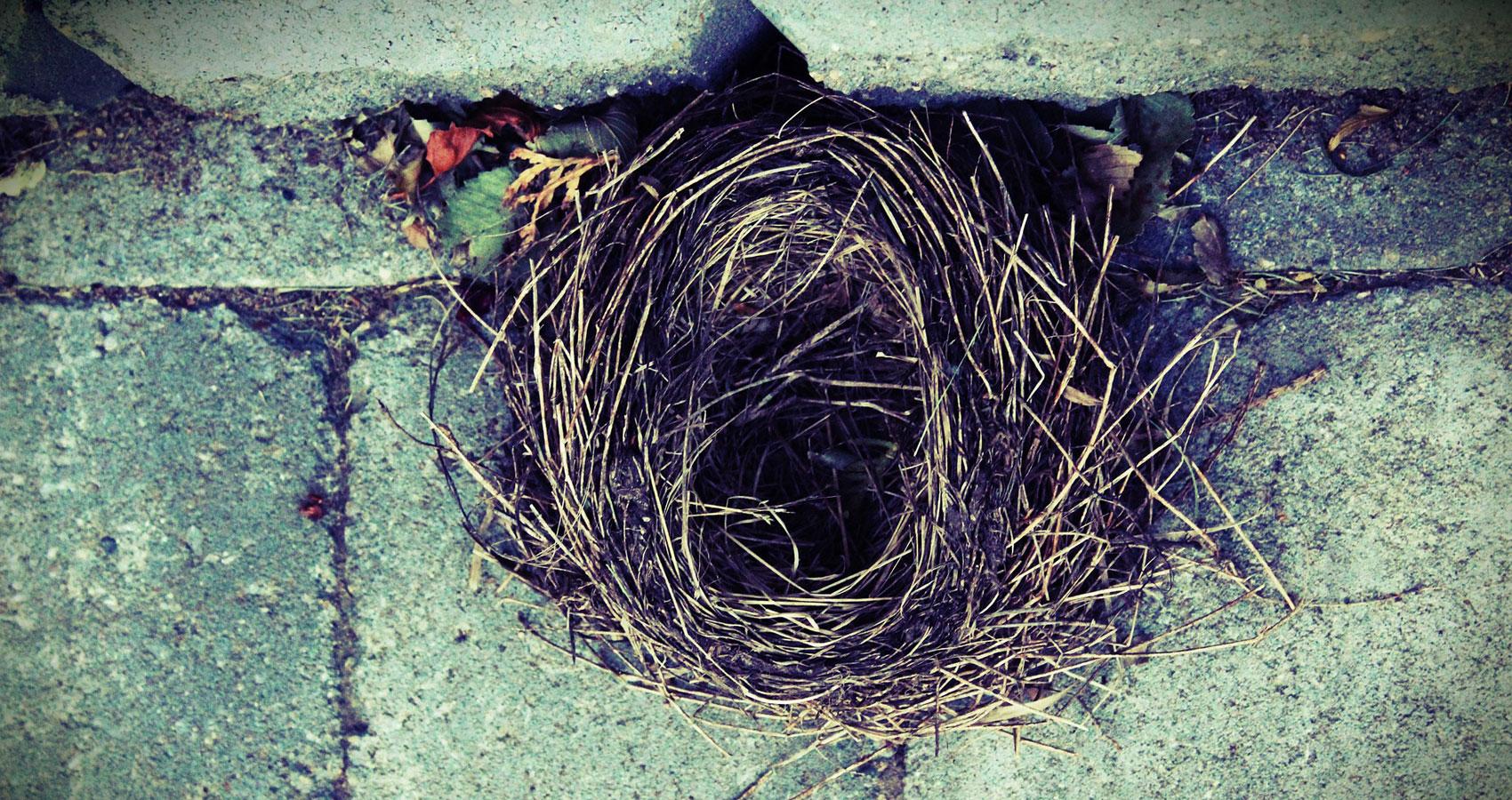 Nest written by RhymeRula at Spillwords.com