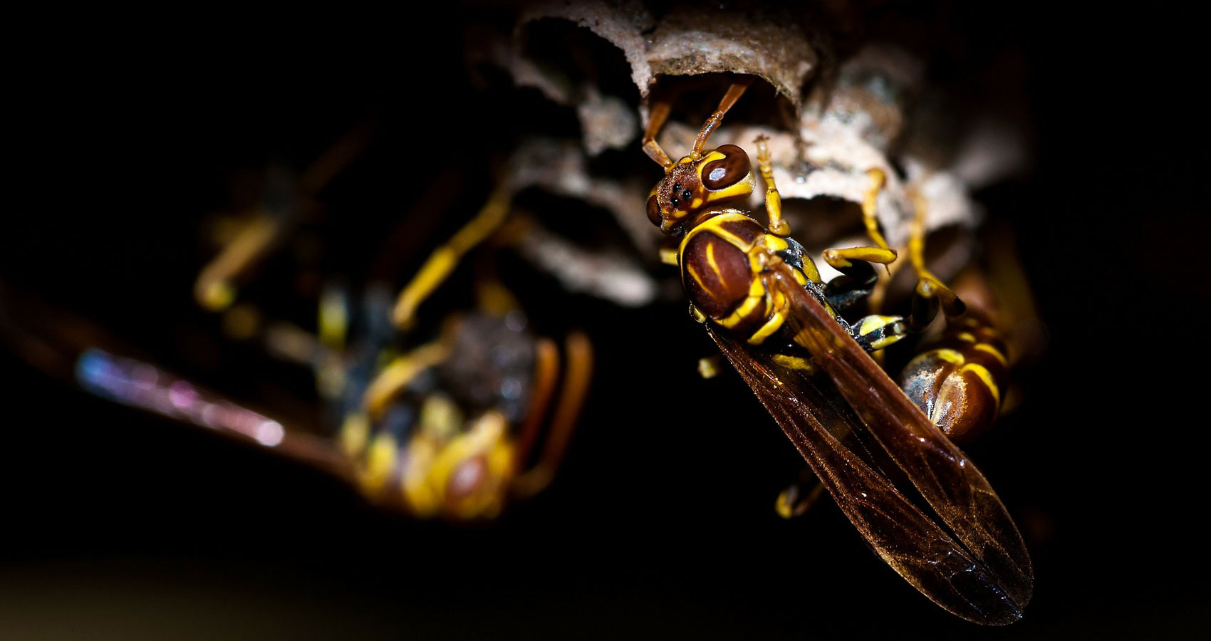 Wasp's Nest written by Polly Oliver at Spillwords.com
