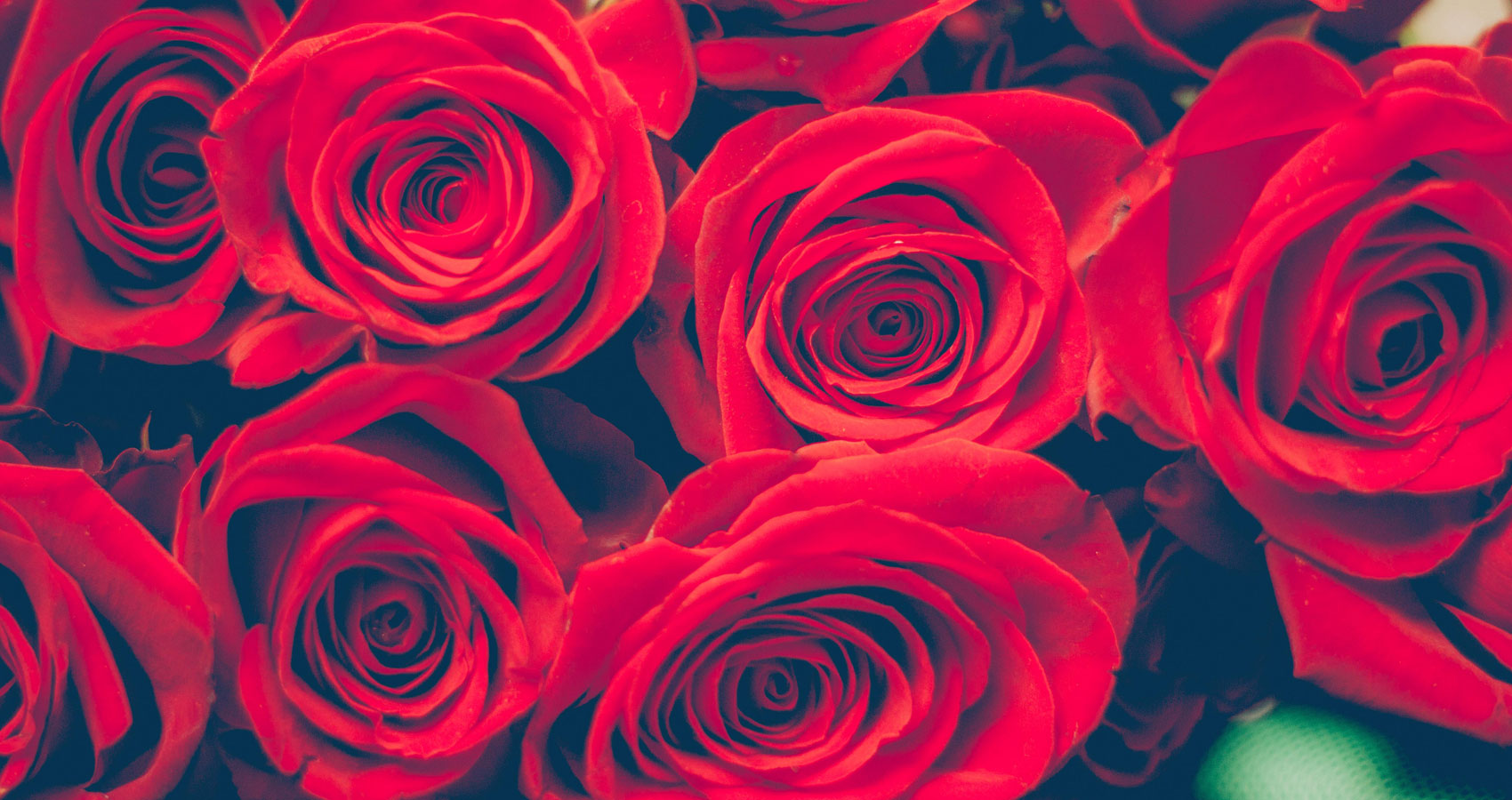Garnet Roses Only Cry At Night, written by Fallen Engel at Spillwords.com