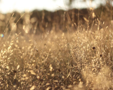 THE SWEETNESS OF GRASS by Steve Carr at Spillwords.com