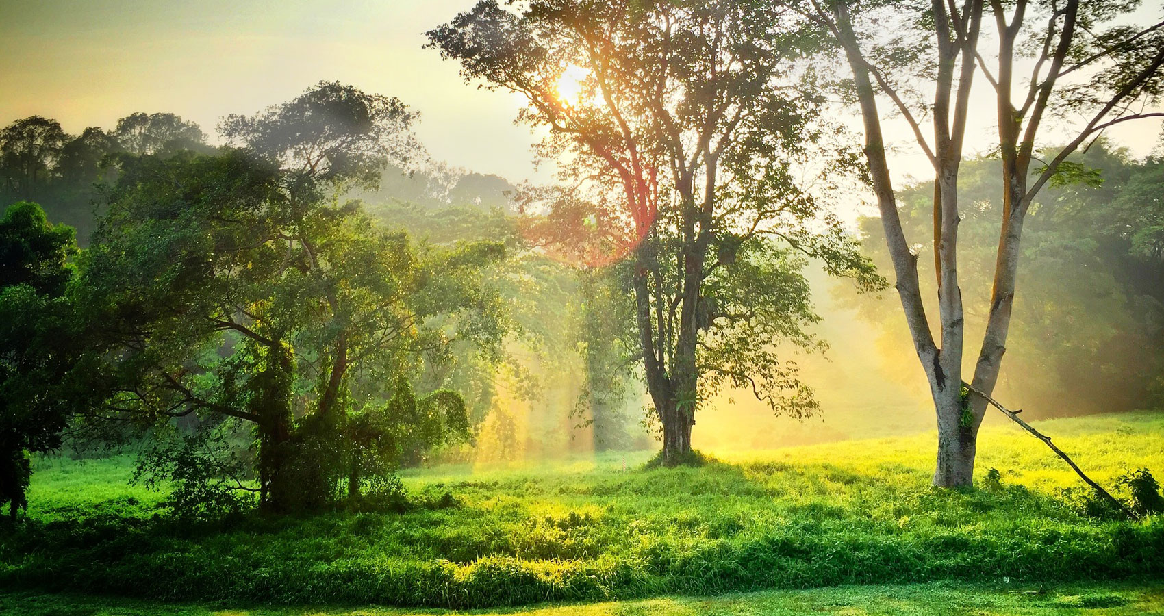 The Morning written by Daniel S. Liuzzi at Spillwords.com