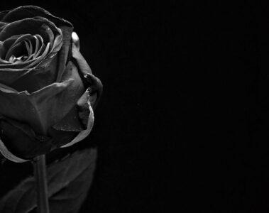 BLACK ROSE by Madhumita at Spillwords.com
