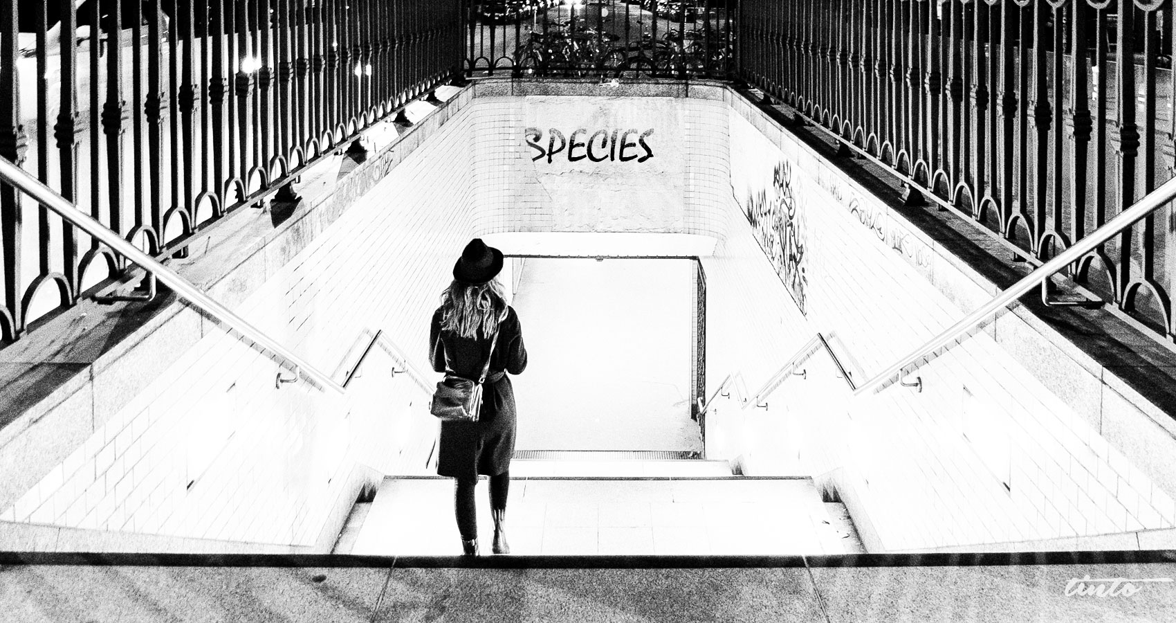 Two-Legged Species written by Anne G at Spillwords.com