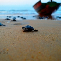 Baby Steps Out... written by Nishand Venugopal at Spillwords.com