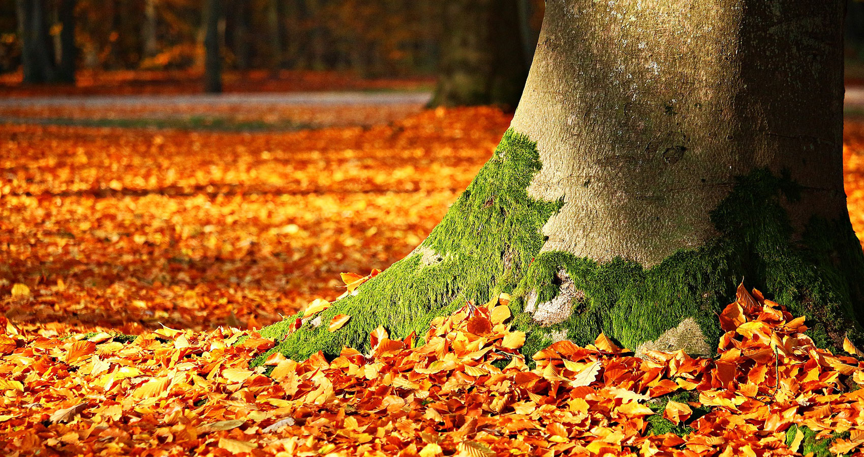 Autumn On The Tree Of Life, written by Aaron Marchant at Spillwords.com