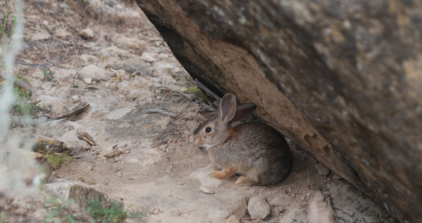 Cottontail, a haiku written by John R. Cobb at Spillwords.com