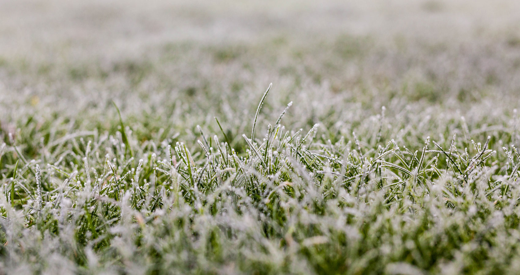 Frost, free verse poetry written by N. K. Hasen at Spillwords.com
