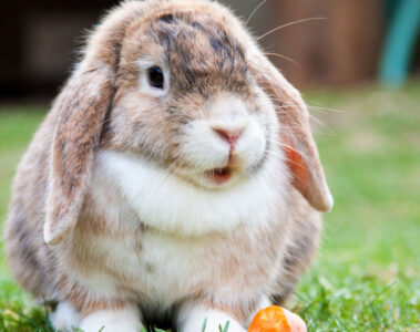 Peter Rabbit, a poem written by Tera Brown at Spillwords.com