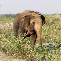 The Gentle Giant written by Nishand Venugopal at Spillwords.com