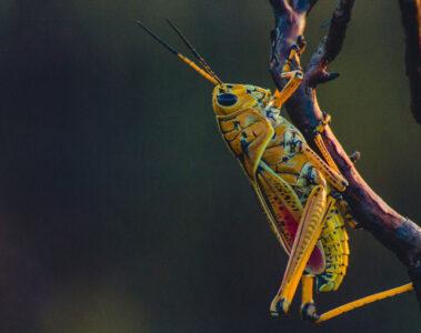 Crickets written by Alisa Guttadauro at Spillwords.com