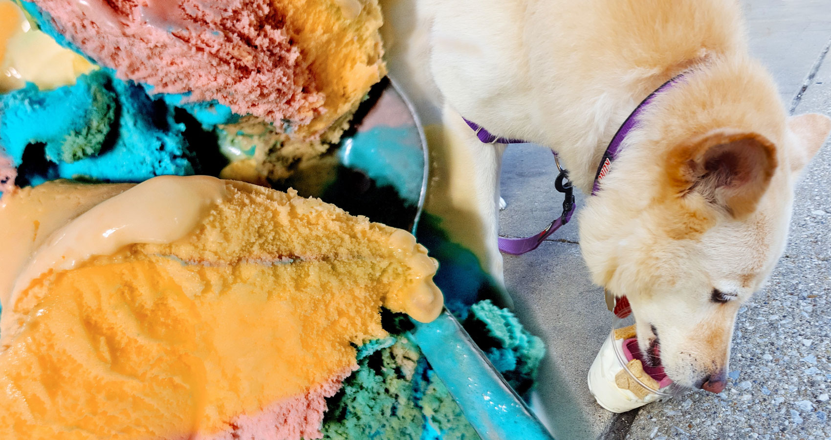 Dog Eating Ice Cream written by N. K. Hasen at Spillwords.com