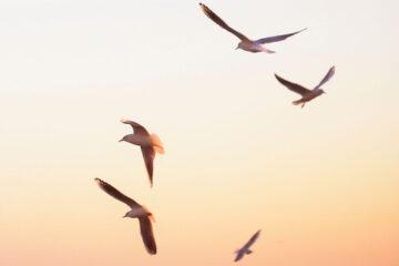 Set Free, a poem written by Amanda Eifert at Spillwords.com
