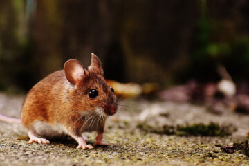 To A Mouse, a poem written by Robert Burns at Spillwords.com