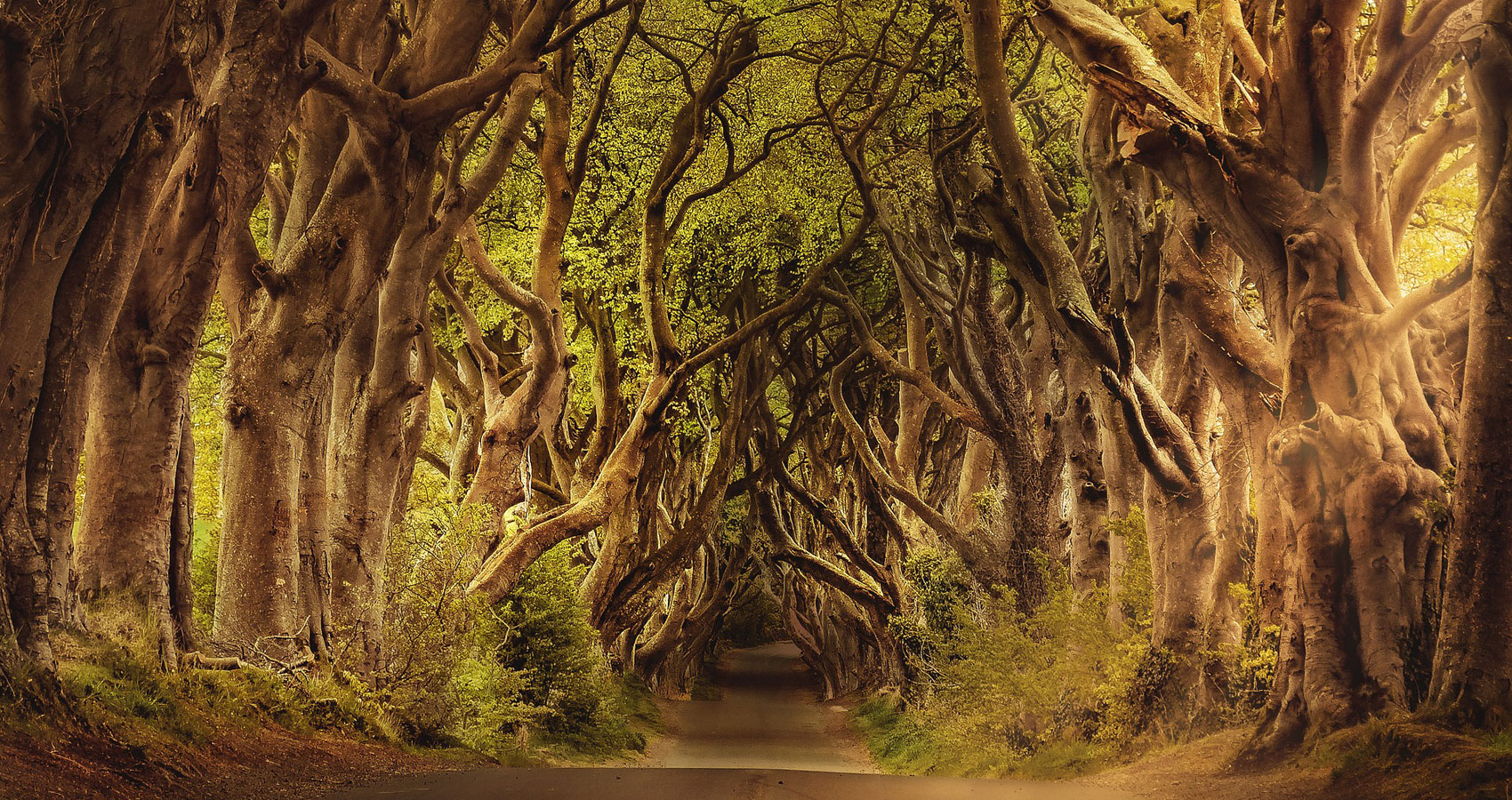TREES, a poem written by Anne G, poet and writer, at Spillwords.com