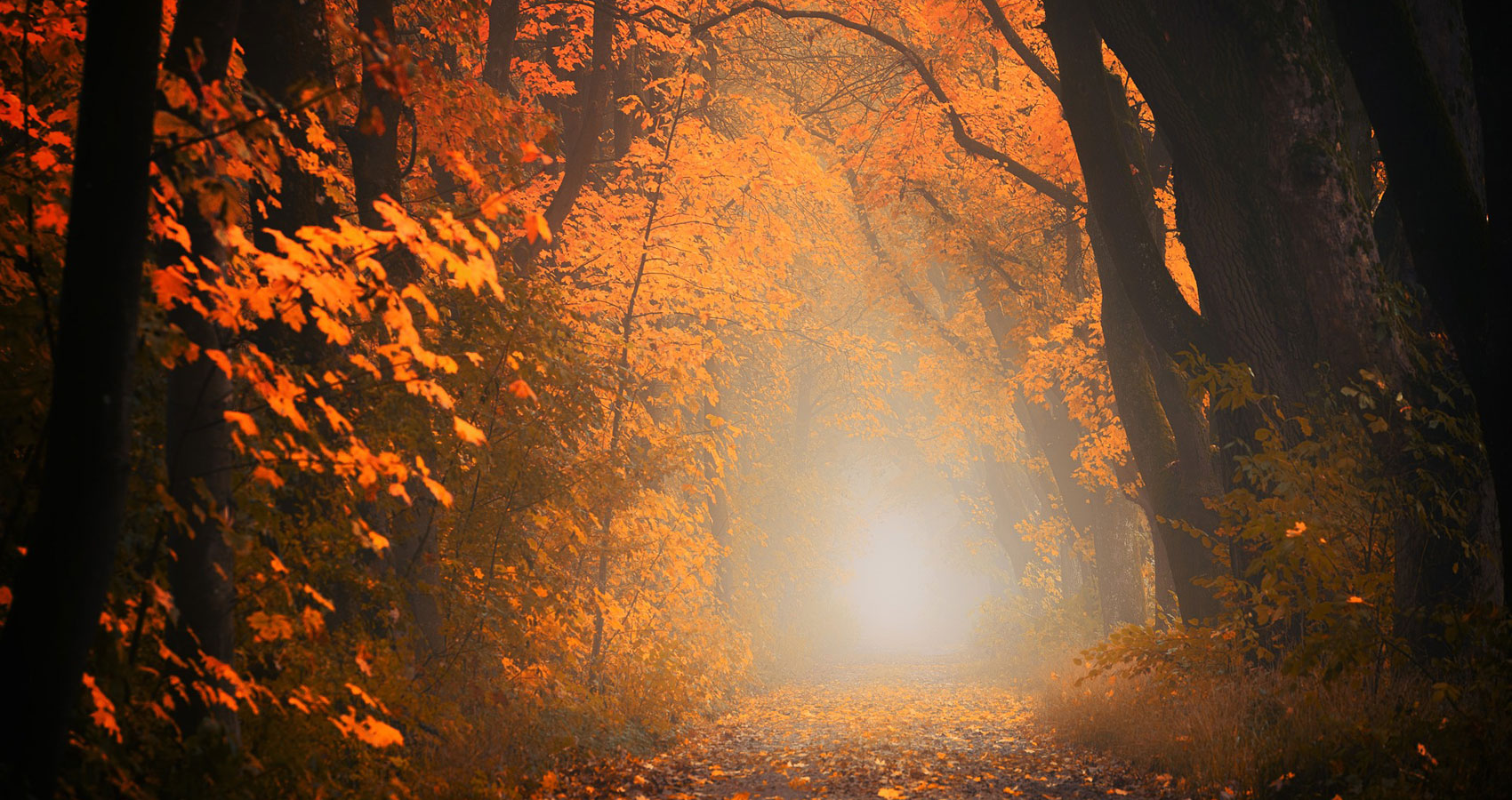 Autumn, a poem written by Yash Tiwari at Spillwords.com