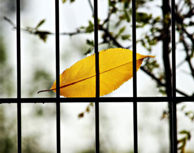 INCONSPICUOUS CAGE by Nida Wasim at Spillwords.com