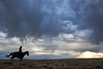 The Rider, a short story written by Bruce Rowe at Spillwords.com