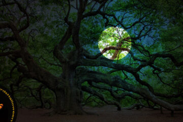 Underneath The Ancient Oak by Jan Smith at Spillwords.com