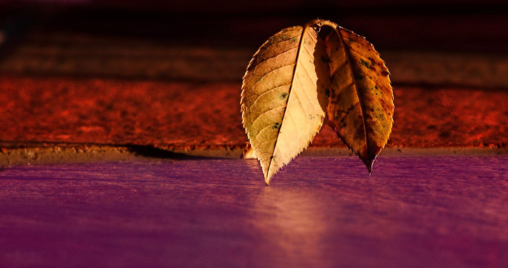 Woodwork, a poem written by Jenna Moquin at Spillwords.com