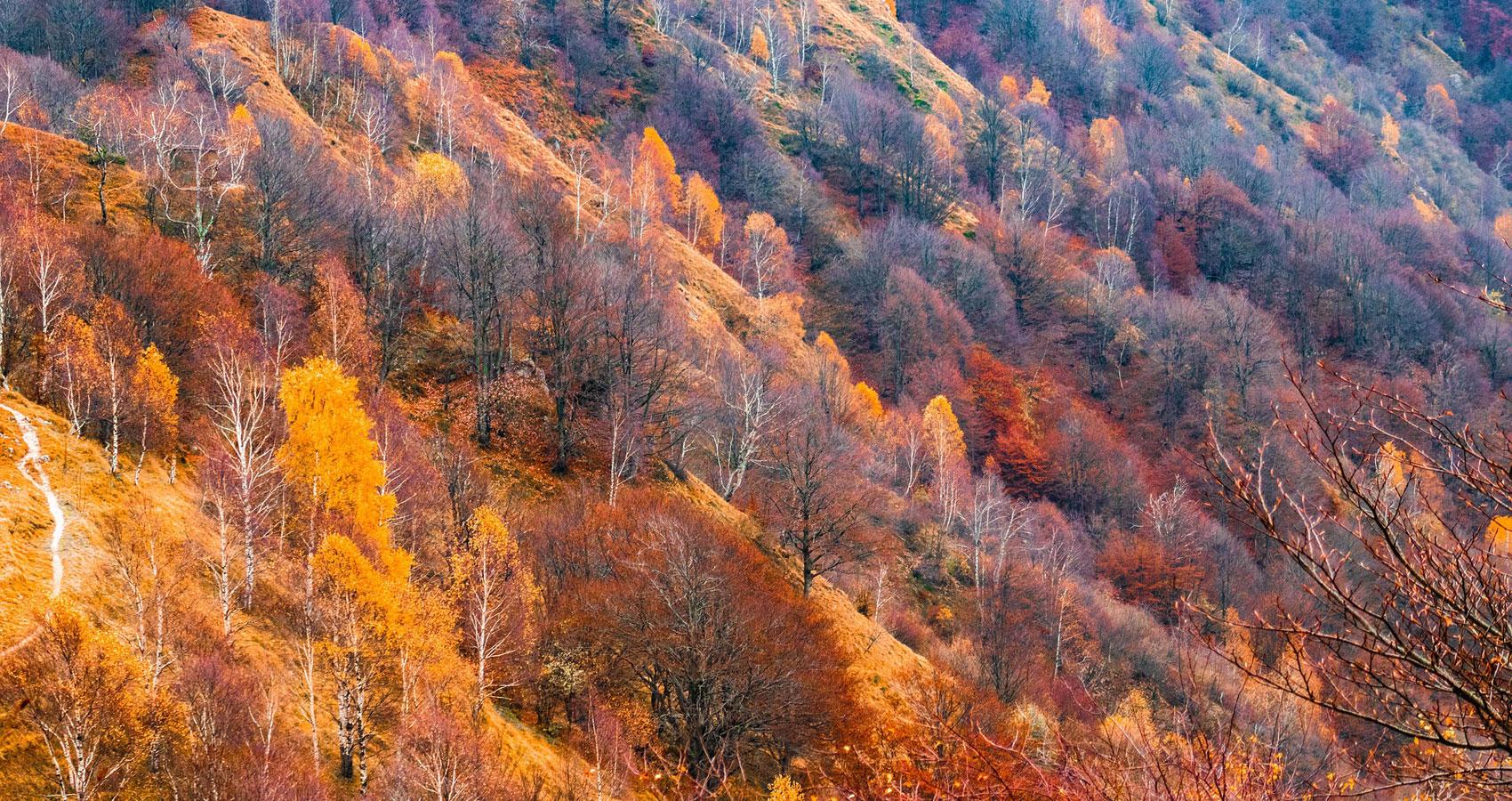 Autumn Moment written by Annalia Fioreat Spillwords.com