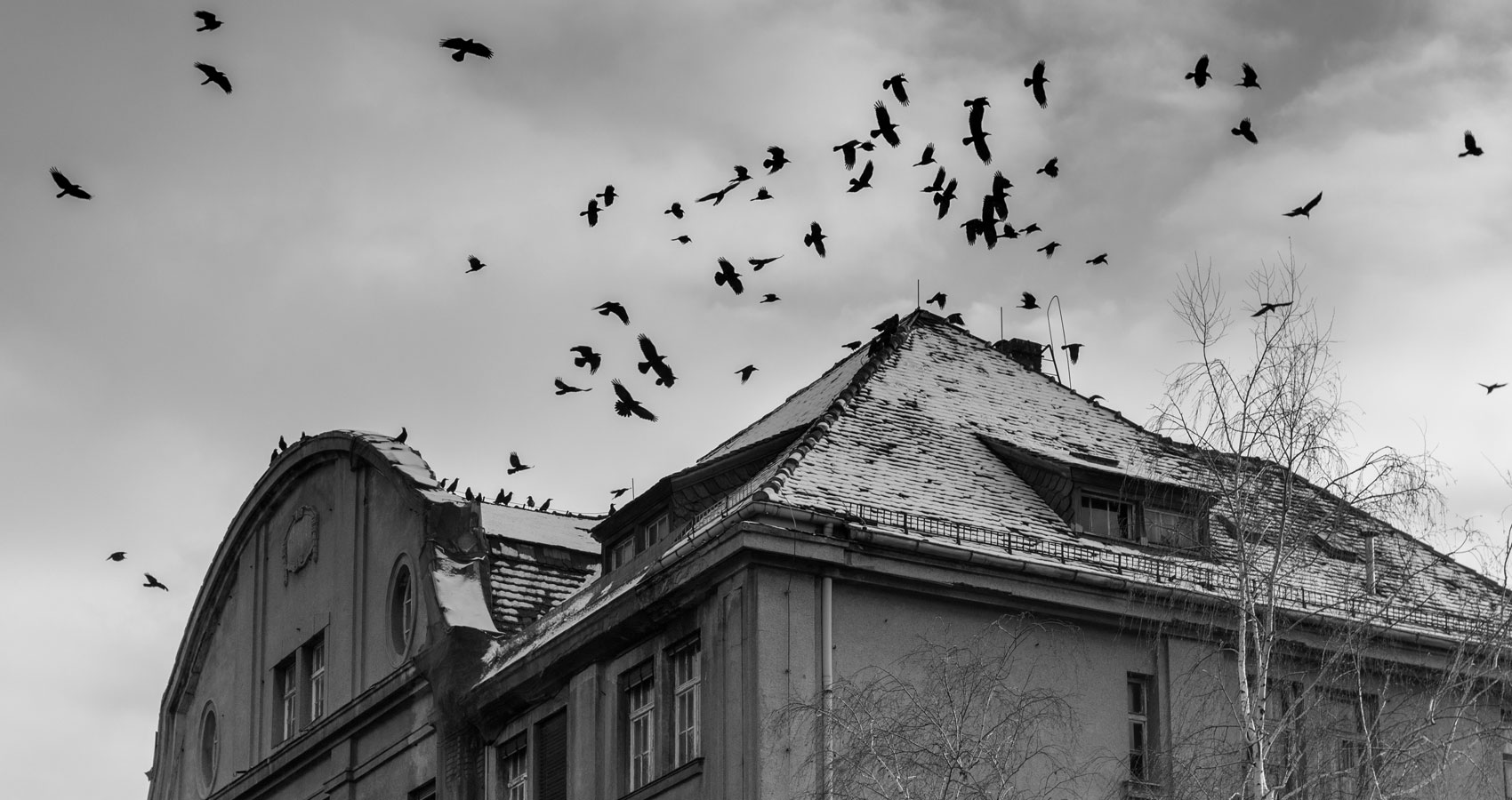 CROWS 5, written by Stanley Wilkin at Spillwords.com