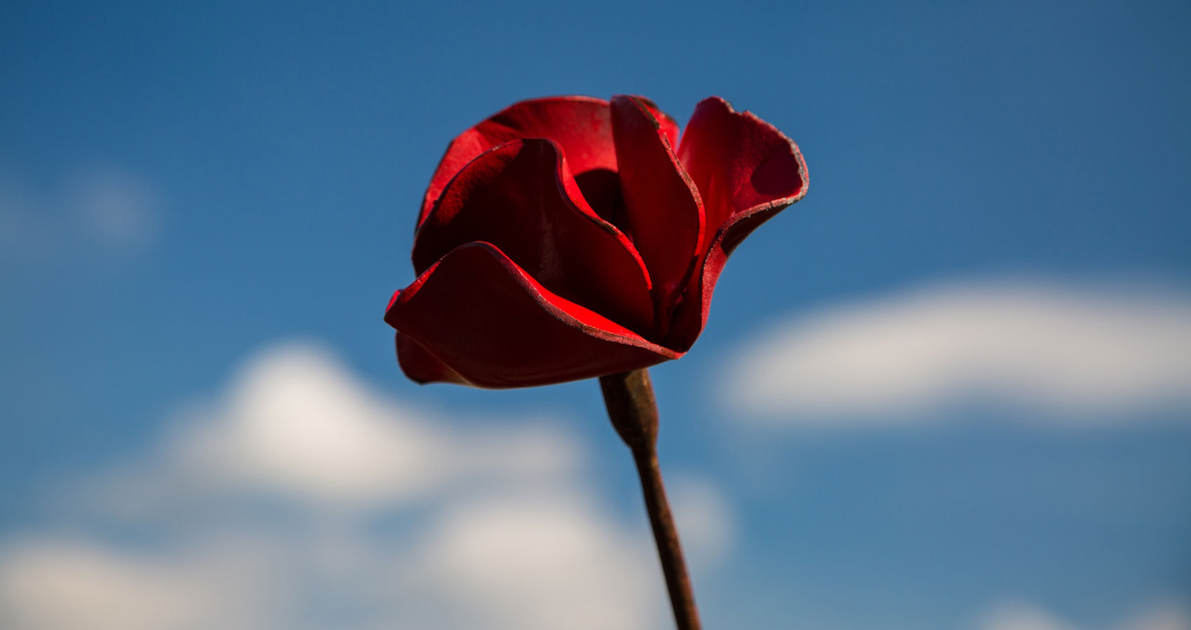 Lest We Forget, written by Matthew Earl at Spillwords.com