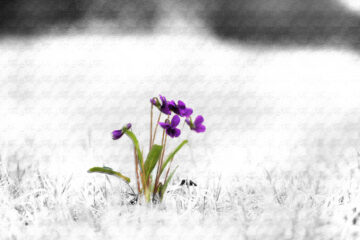 What Is The Color Purple? by Anshika Sharma at Spillwords.com