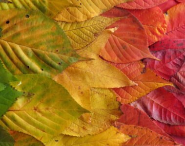 Autumn Is Here To Stay... by Madhumita at Spillwords.com