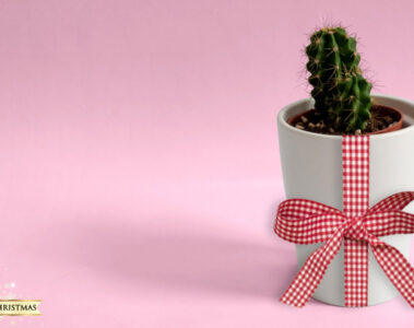 The Christmas Cactus, written by Elizabeth Montague at Spillwords.com