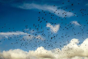 Raven Ridge, written by Doug Donnan at Spillwords.com