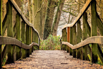 Taking The Solitary Walk, written by TM Arko at Spillwords.com
