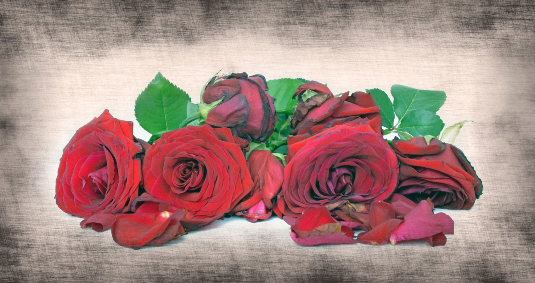 Wilted Red Roses by Michal Reibenbach at Spillwords.com