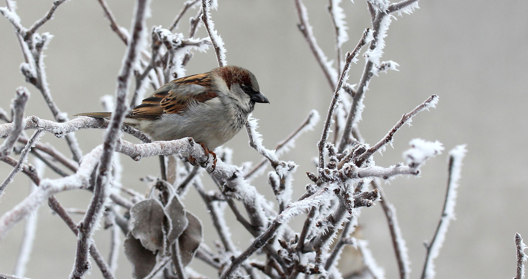 Winter Sparrow, written by Gillian Ferwerda at Spillwords.com