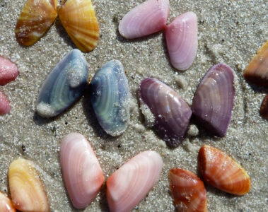 Coquina Clams, poetry written by Sunmy Brown at Spillwords.com