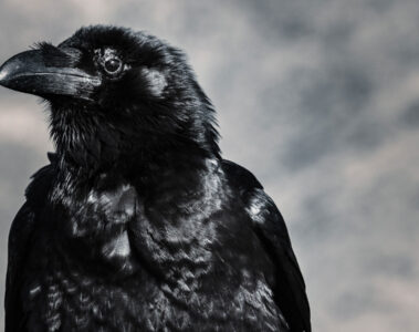 The Crow, poetry written by Raphfael Wormge at Spillwords.com