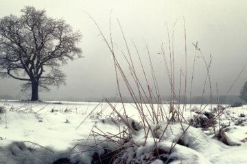 Winter Gray, a haiku written by John R. Cobb at Spillwords.com