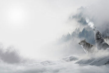 February, a poem written by Jack Wolfe Frost at Spillwords.com