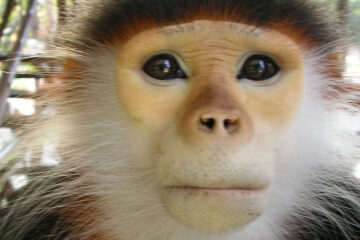 Monkey Wrench, short story written by Doug Donnan at Spillwords.com