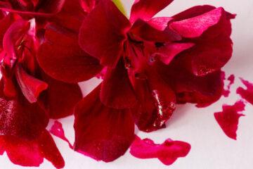 Red Ink, haiku poem written by huntersjames at Spillwords.com